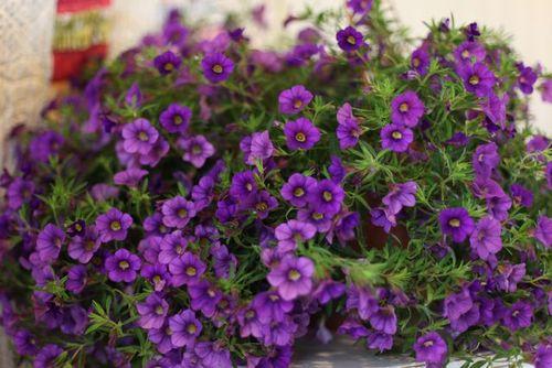 Tn_mom-flowers