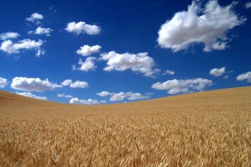 Tn_wheat_field