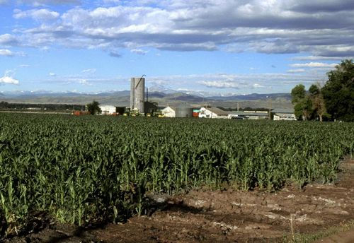 Tn_corn-field-in-colorado
